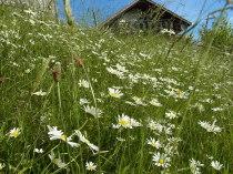 Landschaftspflege - Blumenwiese